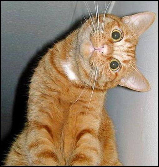 Komik Kedi Ay çok şeker Page 2